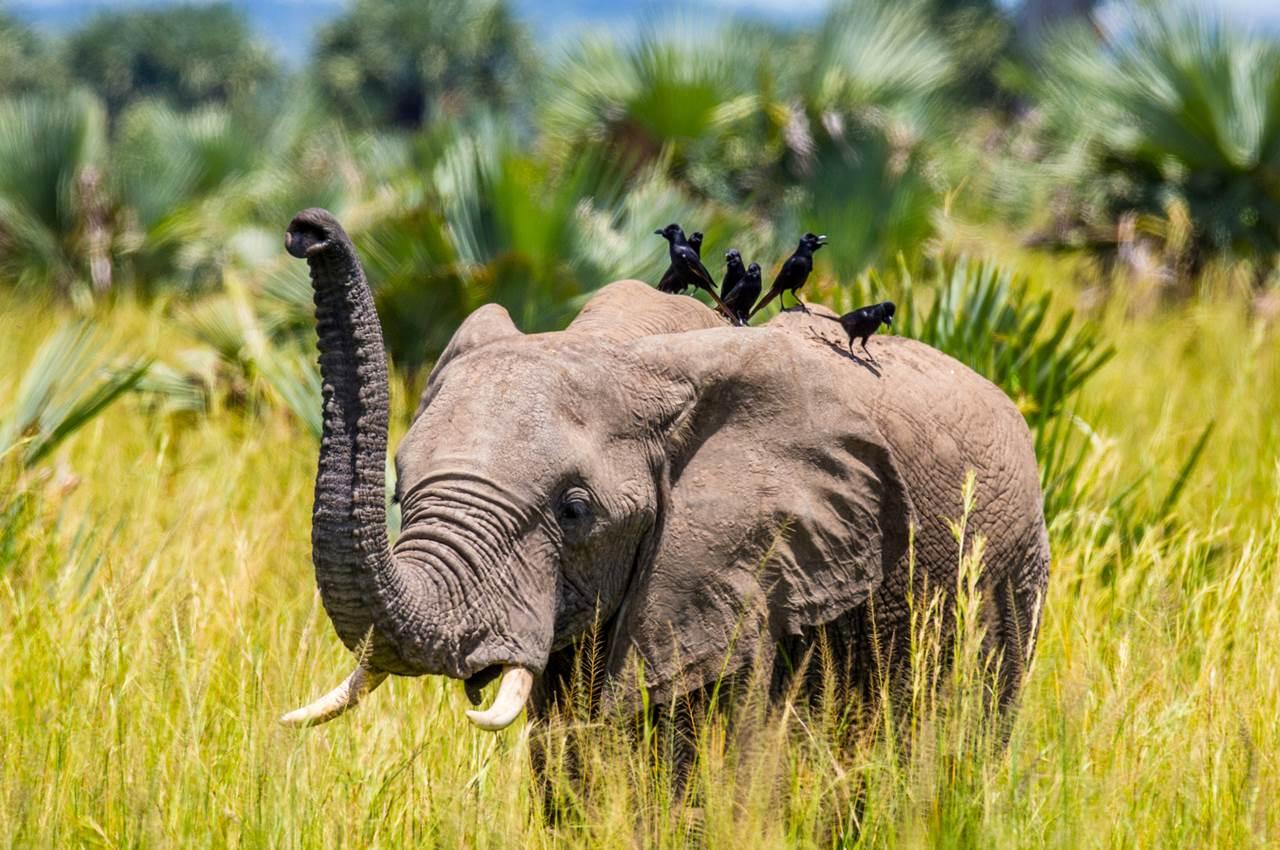 Ouganda visa tourisme